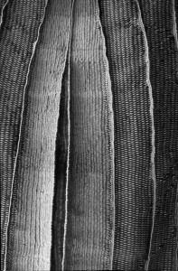 Back Shell - scultura tessile di Federica Luzzi