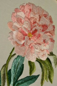 Gabriella Pollastri Peonia rosa